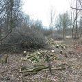 Wycinka drzew, frezowanie pieńków, zrębkowanie gałęzi