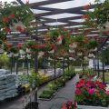 Sklep ogrodniczy w Radzyminie wraz z domem - sprzedam