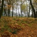 Nieruchomość inwestycyjna - Park Podworski