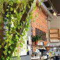 Sprzedam działającą kawiarnię w Śródmieściu