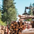Sprzedaż zagraniczna - drewno konstrukcyjne, płyty OSB, pelet itp.