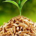 Pellet (granulat) drzewny z sosny A1