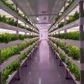 Farmy w kontenerze / Rozwiązania dla pionowych upraw hydroponicznych