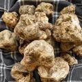 Świeże grzyby Trufla Biała Włochy 1 kg