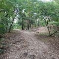 Działka leśna 13420 m2 - Wawa Wesoła - Stara Miłosna ul. Mazowiecka