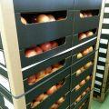 Owoce, warzywa, pieczarka na kraj i eksport, Bronisze